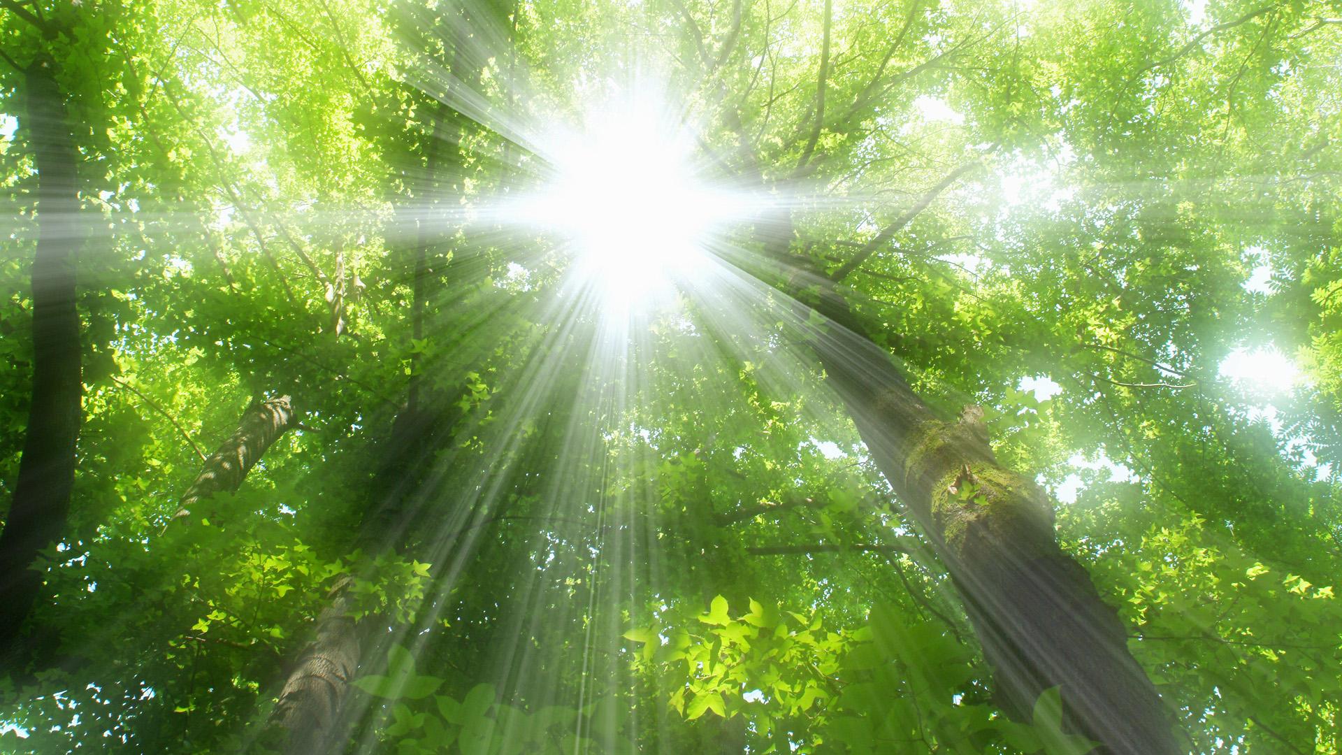 Лучи света сквозь листья  № 3096092 бесплатно